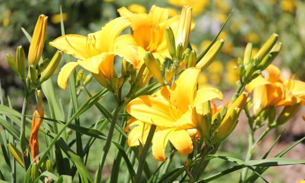 10 conseils pour faire pousser des plantes vivaces trucs for Les plantes vivaces