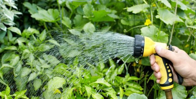 10 façons de conserver l'eau dans votre jardin