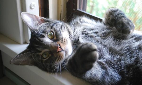 6 façons futées de soigner vos animaux avec les plantes