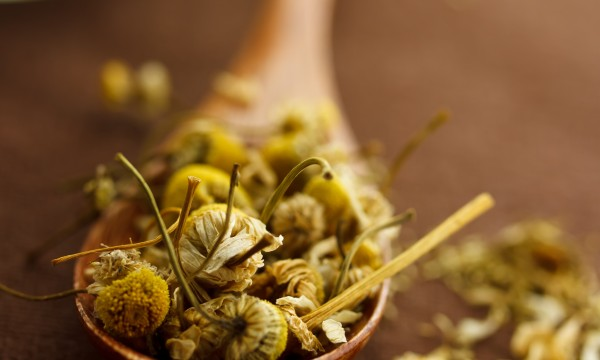 Cultivez la camomille, plante médicinale