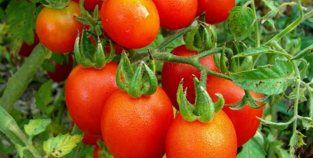 Recette aux super-aliments: tomates gratinéesau fromage