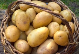 2 recettes délicieuses depommes de terre farcies