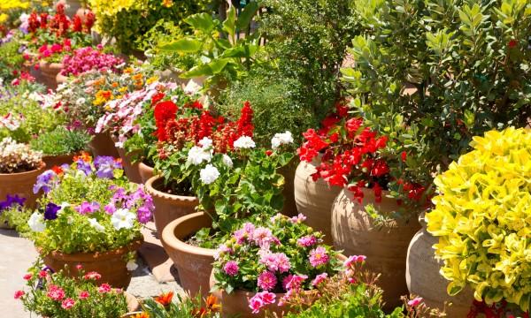 Comment surveiller les racines de vos plantes en pot