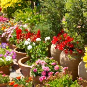 Comment choisir des plantes et des fleursnécessitant peu d'entretien entre le milieu et la fin de l'été