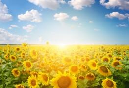 6 plantes tolérantes à la sécheresse