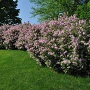 Connaissances en jardinage : planter et entretenirdes arbustes