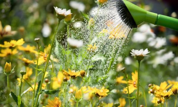 11 pratiques de base pour arroser bien votre jardin