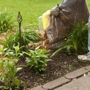 9 paillis pour votre jardin et votre potager