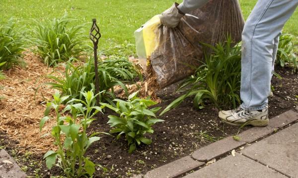 9 paillis pour votre jardin et votre potager trucs pratiques. Black Bedroom Furniture Sets. Home Design Ideas