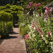 Mauve et rose trémière : 2 plantes médicinales qui embellissent votre jardin