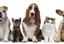 Comment vivre avec des animaux de compagnie lorsque vous êtes allergique