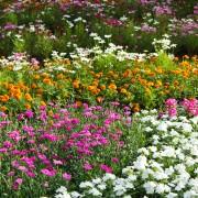 4 conseils pour économiser sur les plantes