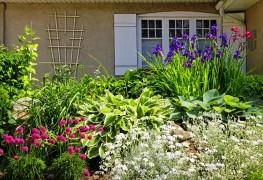Faire pousser des iris: guide du débutant