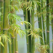 Tout savoir sur le nettoyage de l'osier, du roseau, du rotin et du bambou