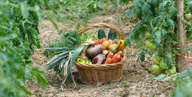 10 bonnes raisons d'acheter des aliments bio