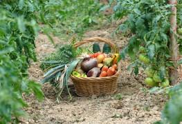 6 étapes à suivre pour créer un jardin écoresponsable