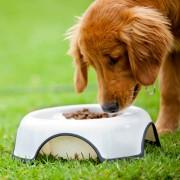 Nettoyez le matériel de votre chien sans tracas