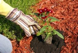 2 id es de jardins la fran aise et l 39 anglaise for Paysagiste anglais celebre