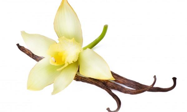 de la vanille dans le jardin !   trucs pratiques