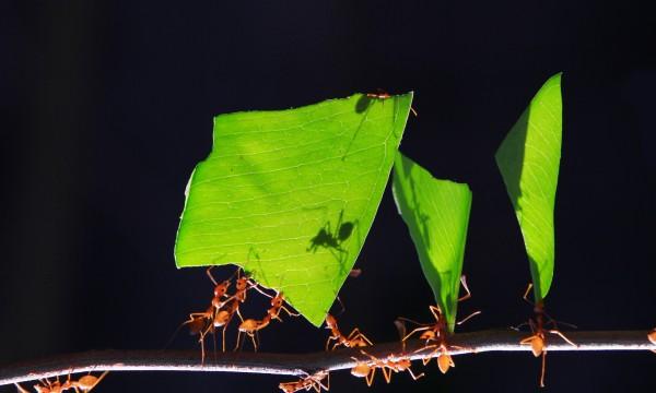 15 armes pour combattre fourmis et coquerelles (cafards)