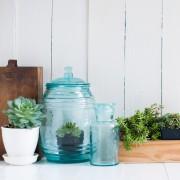 13 conseils pour arroser et nettoyer les plantes d'intérieur