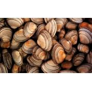 Conseils pratiques de nettoyage : coquillages et corbeilles à papier