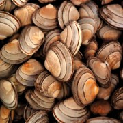 2 plats mettant en vedette les crustacés pour combattre la maladie