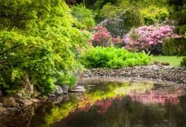 Secrets de jardin pour les arbustes, les arbres et la couverture végétale