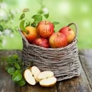 Choisir la bonne variété de pomme