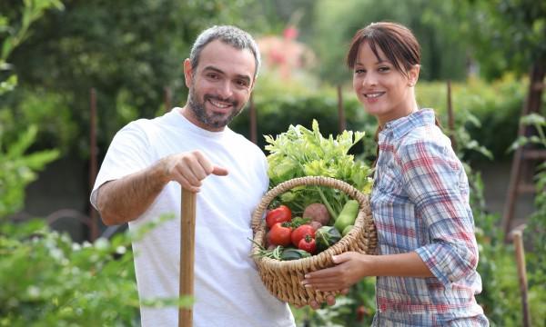 Choisir les bons légumes pour votre jardin