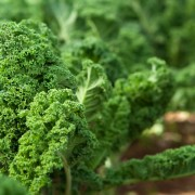 Ajoutez ces 5 légumes verts dansvotre cuisinepour plus devariété végétale