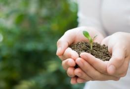 5 étapes pour créer de nouvelles plantes à partir d'une pousse en pleine croissance