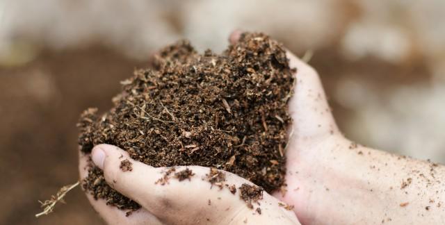 Conseils pratiques pour équilibrer le pH du sol de votre jardin