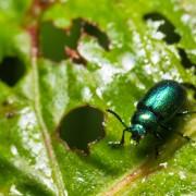 12 façons de s'occuper desravageurs du jardin naturel