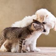 8 suggestions pour untoilettage pour animaux naturel