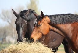 Lignes directrices pour l'alimentation des chevaux par niveau d'activité