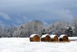 5 vitamines essentielles dont vous avez besoin pour les mois d'hiver