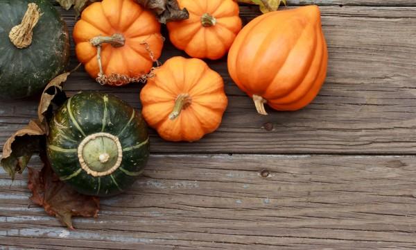 Jardinage écologique : cultiver des courges et des citrouilles