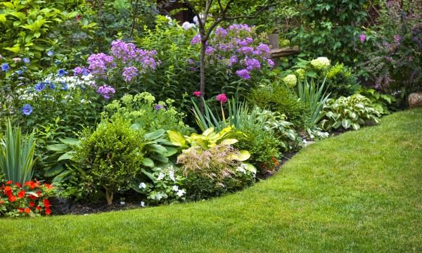 Plantes annuelles et vivaces dont tous les jardins ont besoin