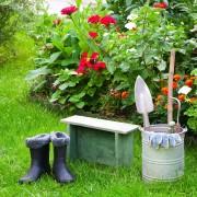Comment prendre soin des plantes annuelles et vivaces tout au long de l'année