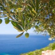 Les nombreux avantages de l'huile d'olive