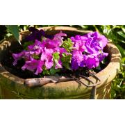 Conseils pratico-pratiques pour entretenir vos pots de fleurs et poutres