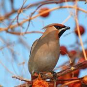 Défendre les arbres fruitiers et les jardins contre les bêtes sauvages