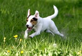 Gardez votre chien en bonne santé avec de l'exercice et desjeux