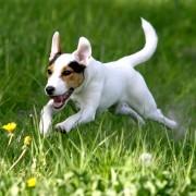 4 raisons de faire bouger vos animaux domestiques