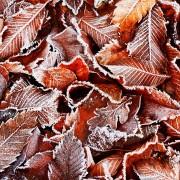 Conseils pour l'hivernage des plantes