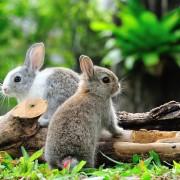 7 façons de chasser les animaux nuisibles d'un jardin