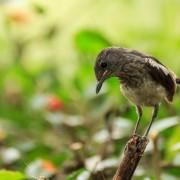 Conseils pour attirer les oiseaux et les insectes utiles