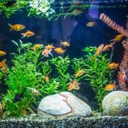 Gardez votre aquarium bien entretenu