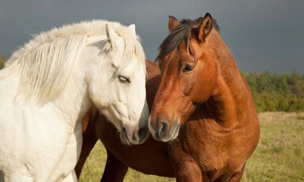 Comment prendre soin des chevaux et des animaux de compagnie